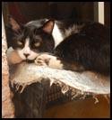 Cat-Catasha.jpg