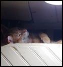 Cat-Erwin.jpg