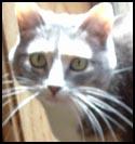 Cat-Nuisance.jpg
