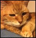 Cat-Ridley.jpg