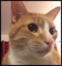 Cat-Roger.jpg