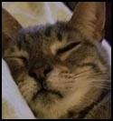 Cat-Roy.jpg