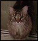 Cat-Rudy.jpg