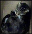 Cat-Smokey.jpg