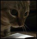 Cat-Sunny.jpg