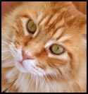 Cat-Tabby.jpg